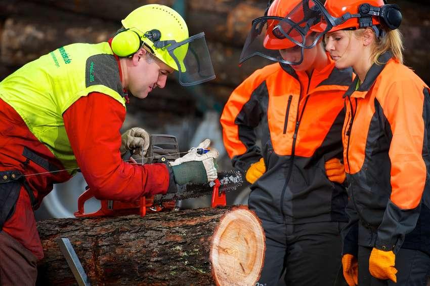 Brennholzselbstwerber-Gesetze-Vorschriften-Unfallverhuetung-Forst-Wald-Holz-schlagen